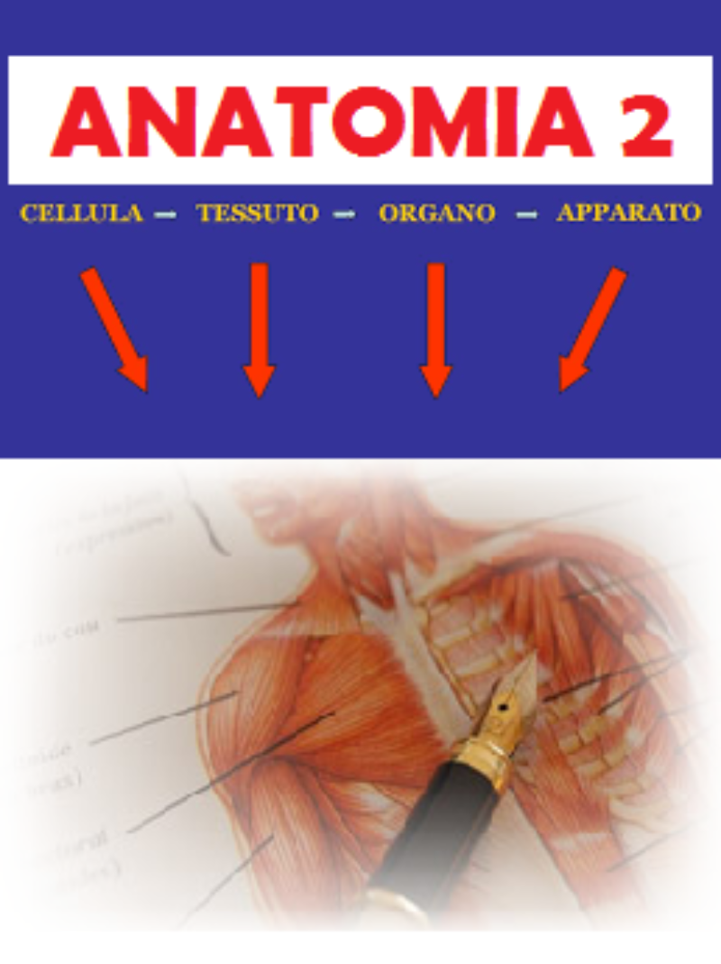 anatomia-2-sistemi-e-apparati-del-corpo-umano-corso-fad